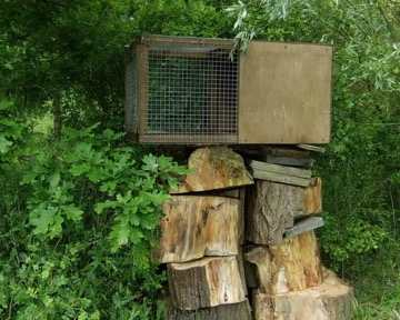 A typical Hack Box - the mesh will be removed once the residents have grown accustomed to their surroundings