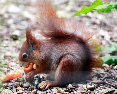 squirrel-3-2.jpg