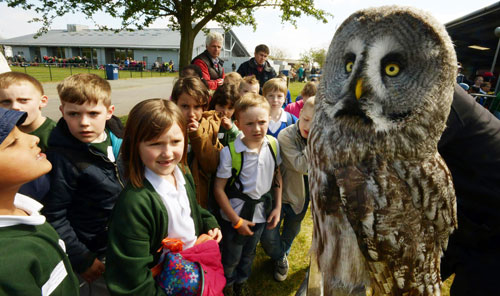 Fascinated youngsters take in the owlish sights at the Schools Farm Fair   Image courtesy East Anglian Daily Times