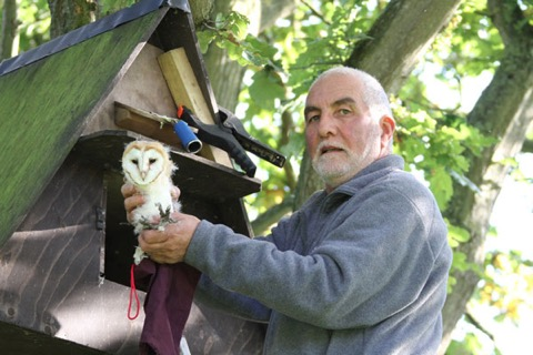 Chris climbs aloft to put return one of the young owlet trio to the nest box.