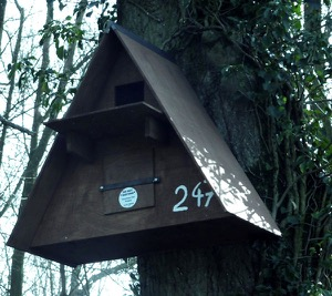 Box 247, for a Barn Owl, is sited high in a tree