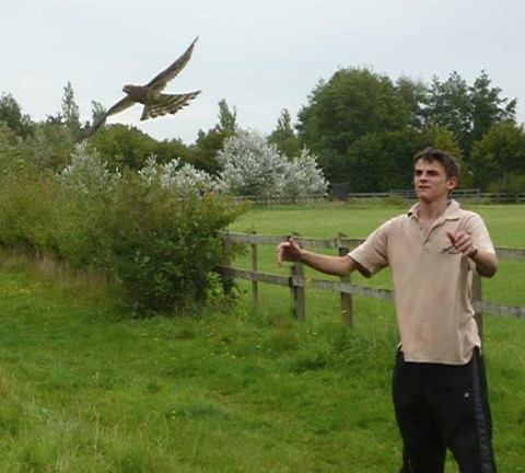 Volunteer Doug releases the Sparrowhawk where it was found, not far from the Sanctuary