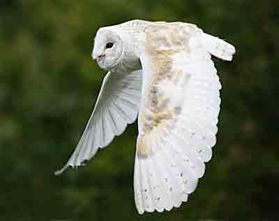 Barn-owl-email-2.jpg