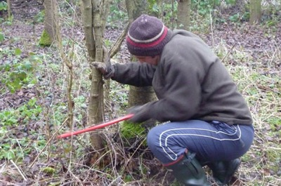 Andy coppiced the small woodland area at the Sanctuary   to make way for fresh growth and more light
