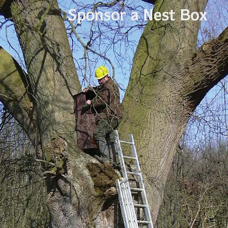 Nestbox-square-web.jpg