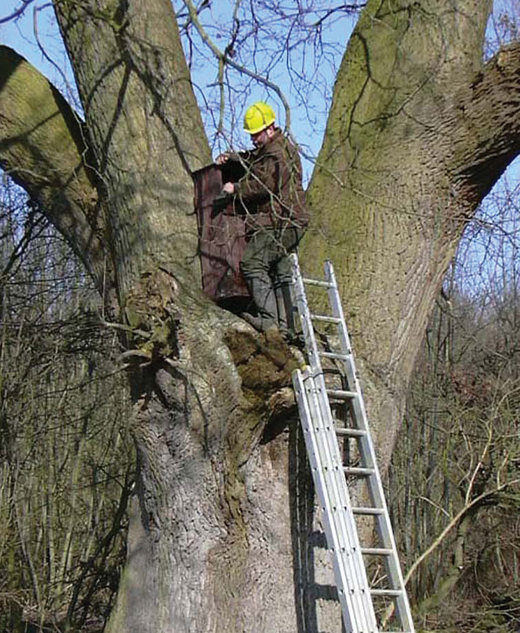 A new tawny owl nest box is securely sited out of predators' reach