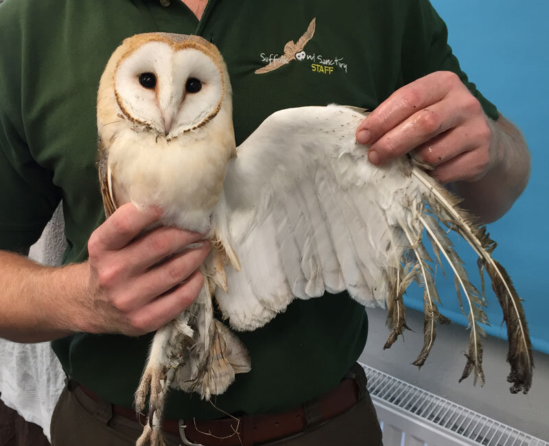 Sticky-Barn-Owl-3.jpg