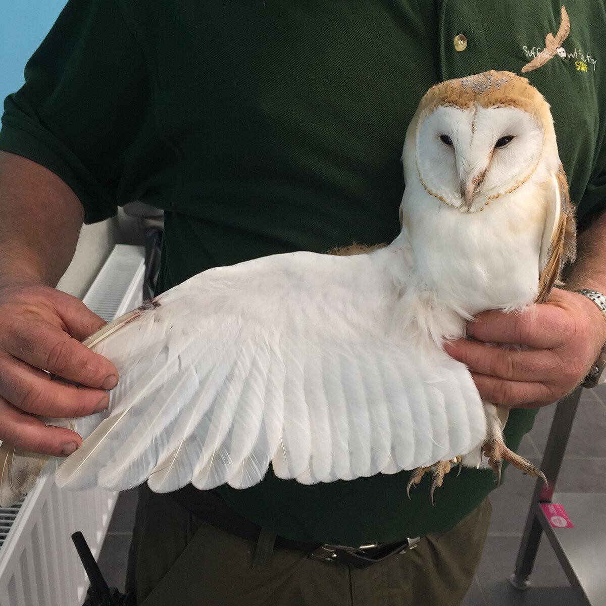 xx_10 Lucky Owls FB Insta 1.jpg