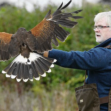 Falconry-for-beginners3.jpg