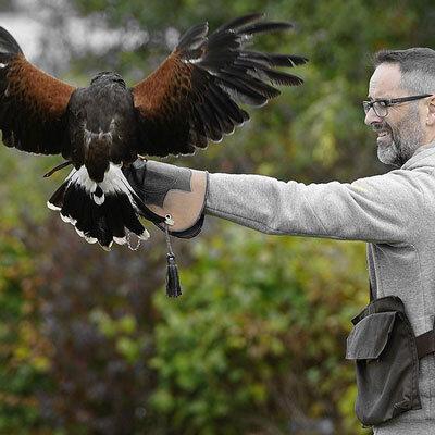 Hawk-Walk2.jpg