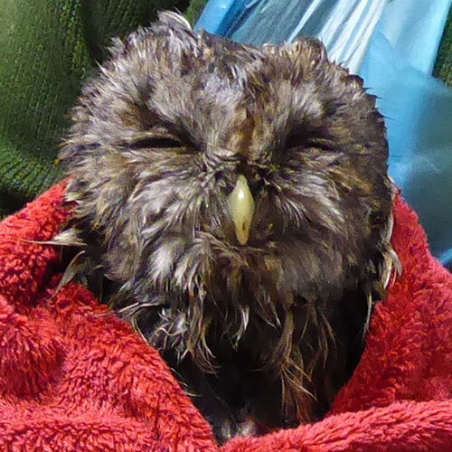 Owl Help