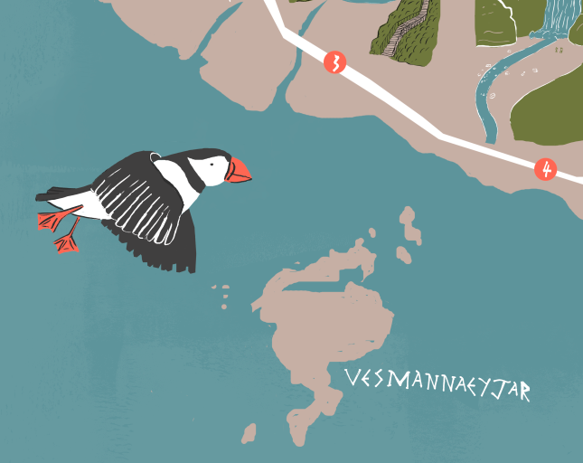 vesmannaeyjar - A puffin in flight over the small island that's visible from the mainland, Vesmannaeyjar.