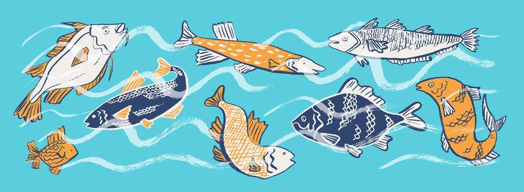UNUSED FISHY PATTERN