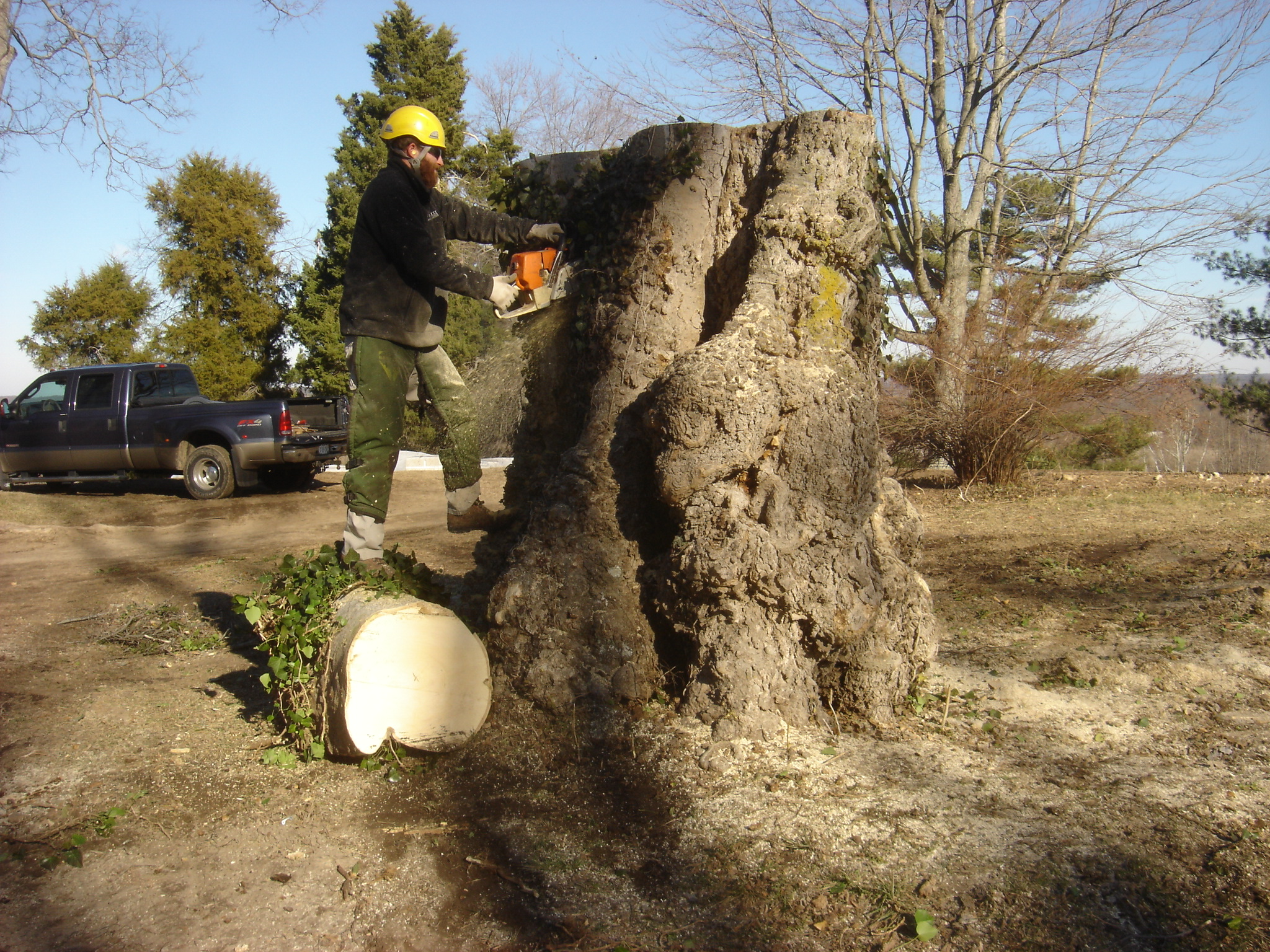 Removing Hackberry Burl from Gay Mont