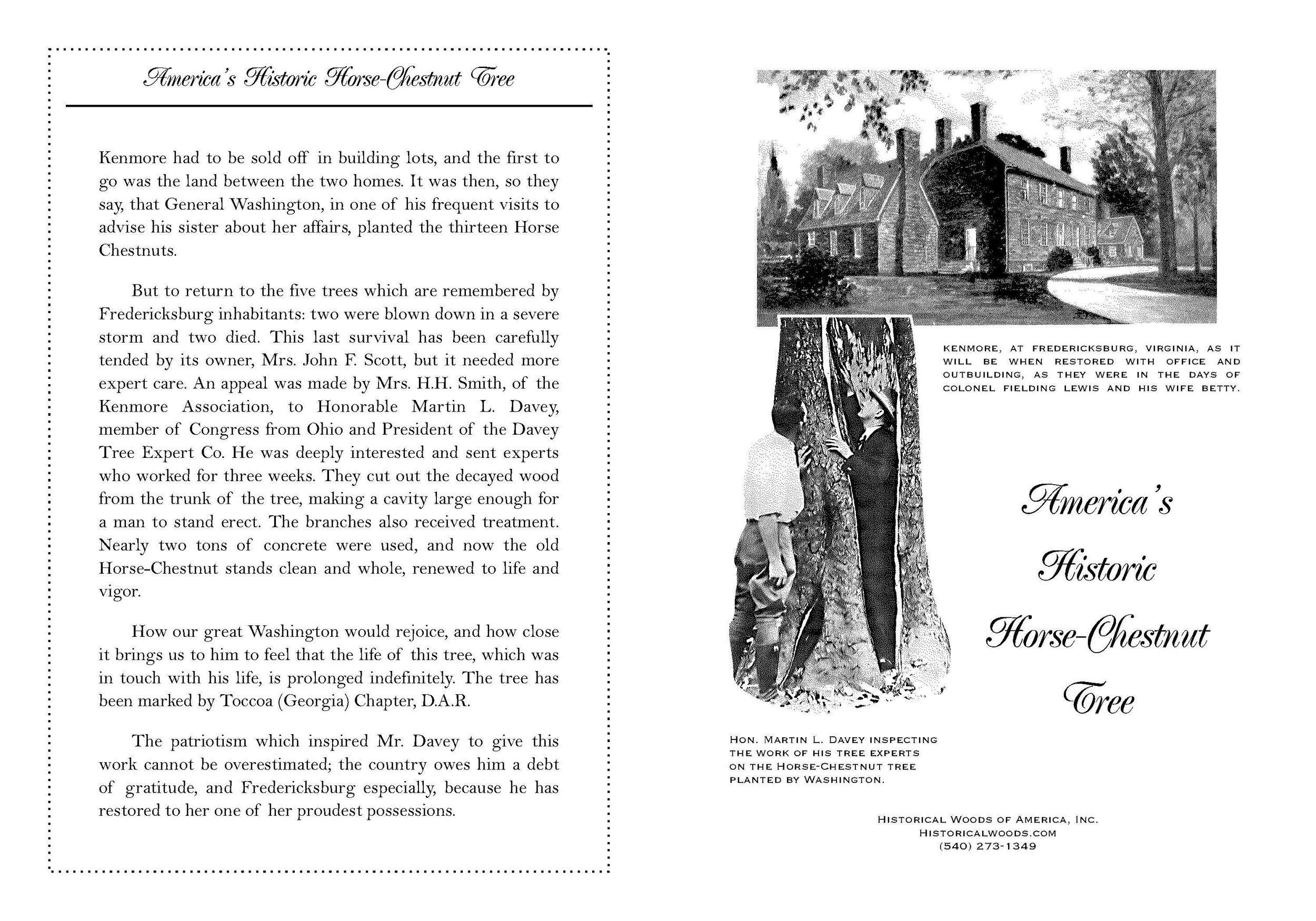 HorseChestnutTree+pdf_Page_1.jpg