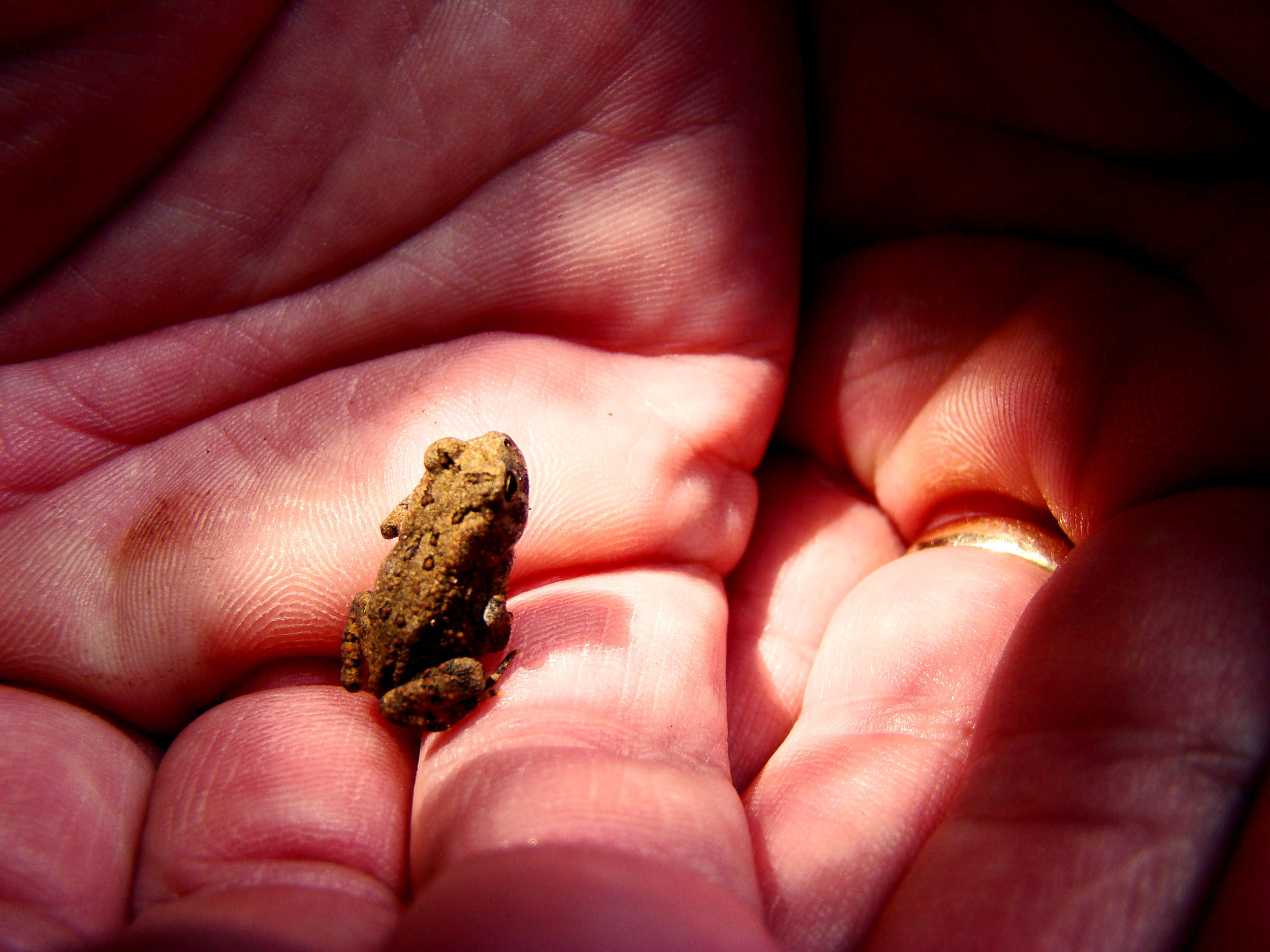 Babyfrog.Ohio.Aug07.SonyDSCH7..jpg