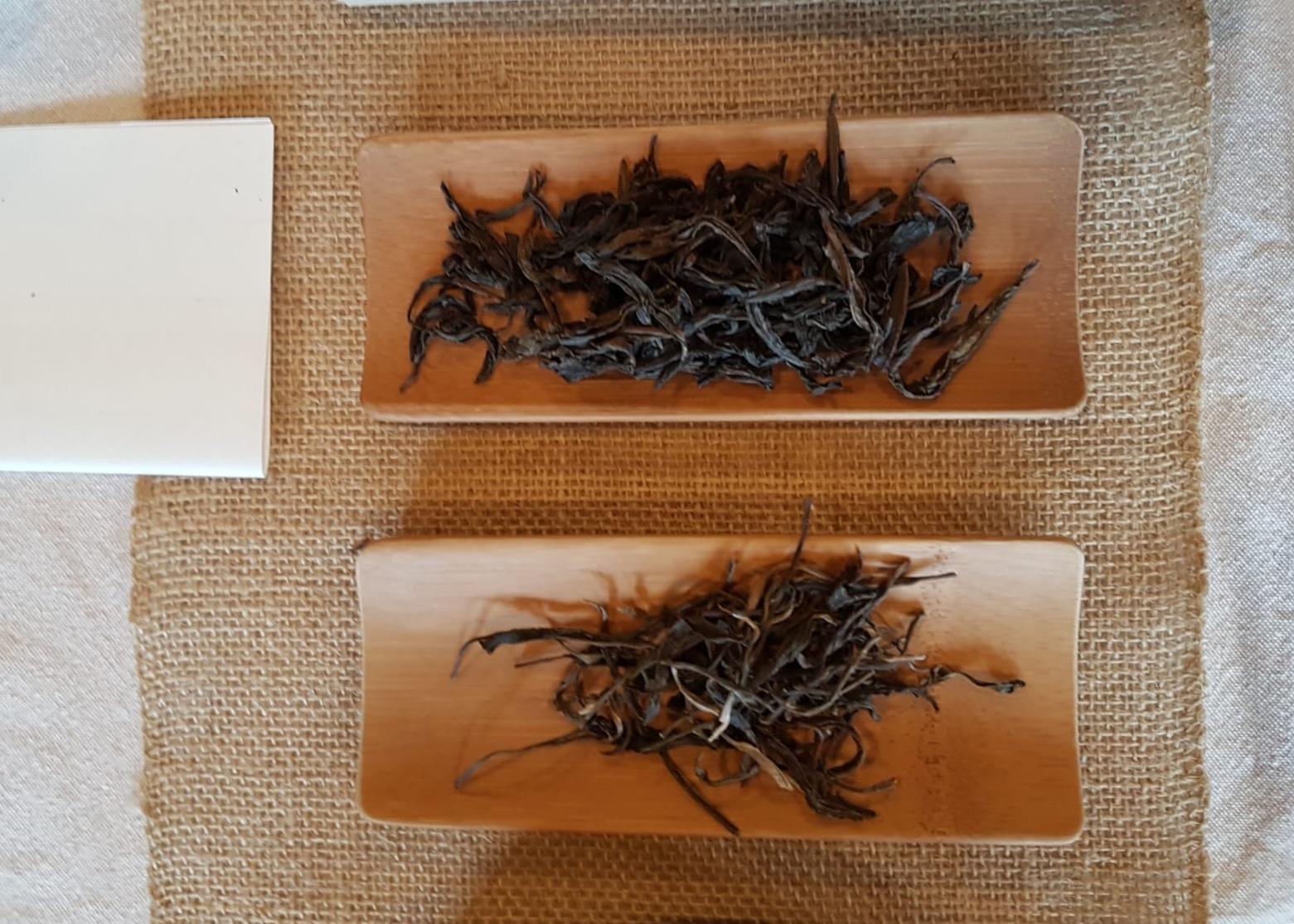TeaXchange Dec 2018: Boil the Leaf
