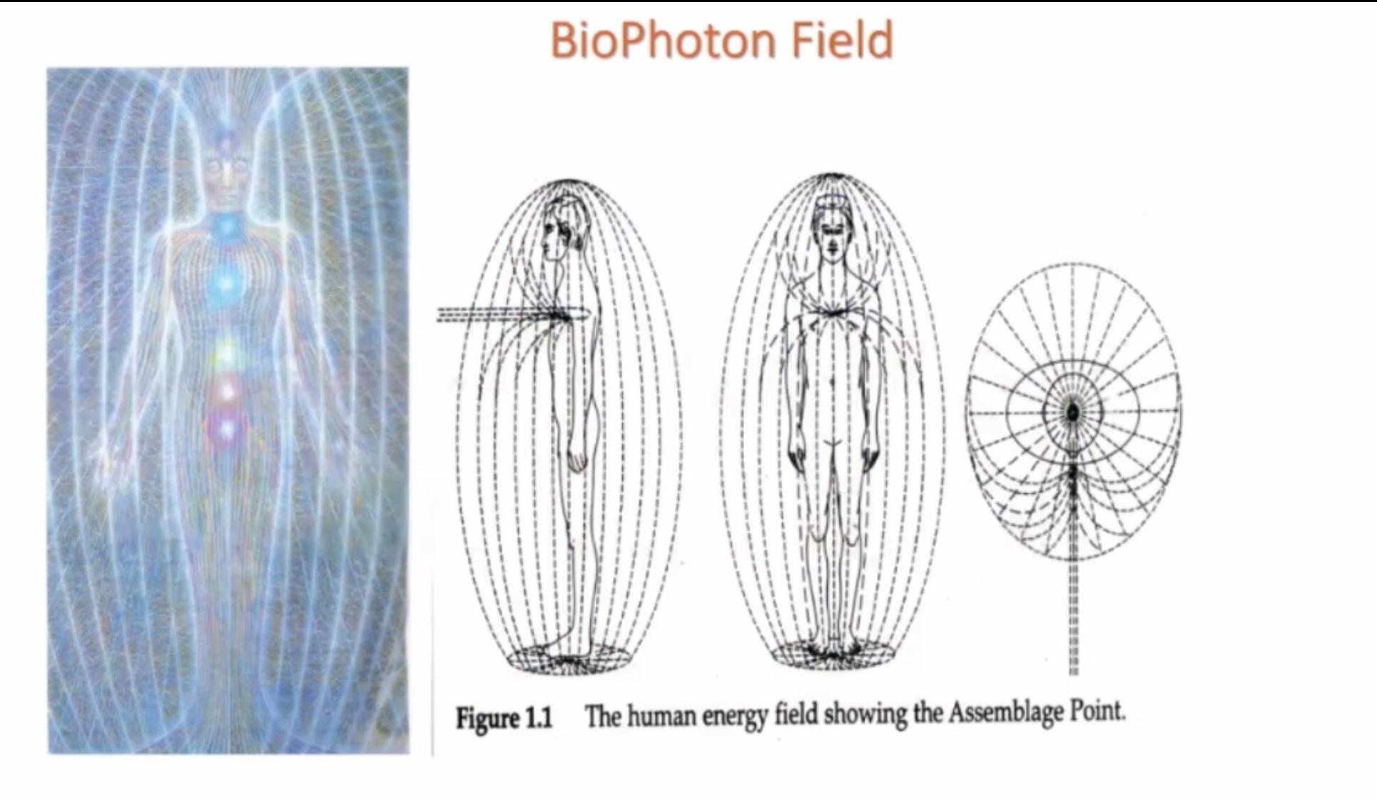 bioenergy photo 1.jpg