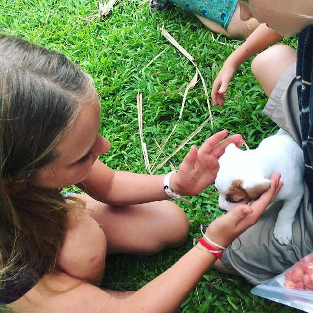 Land of babies and puppies #bigislandhawaii