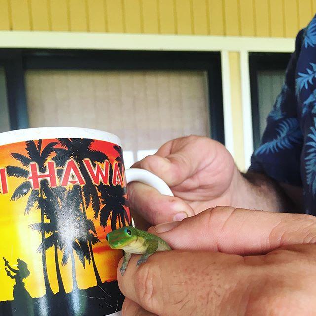 Coffee with gecko please #bigislandhawaii