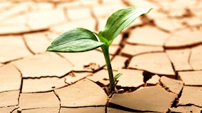 Drought Control & Management - Nowadays, drought stress is an inevitable experience in modern landscapes and gardens. Proper siting and preventive strategies can protect your lawn, garden and landscape in the summer and winter months.