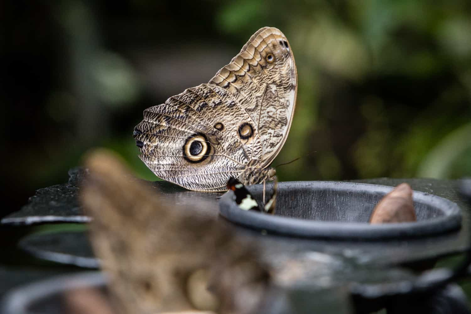 Photo of butterfly on feeder bowl in Butterfly Observatory ceremony & elopement site.