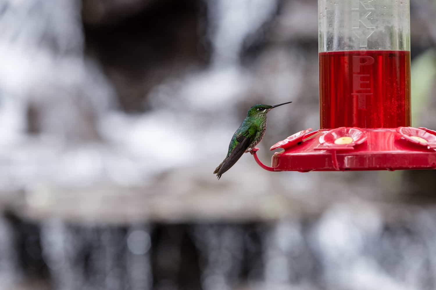 Close-up photo in amazing wedding ceremony site of humming bird in garden.