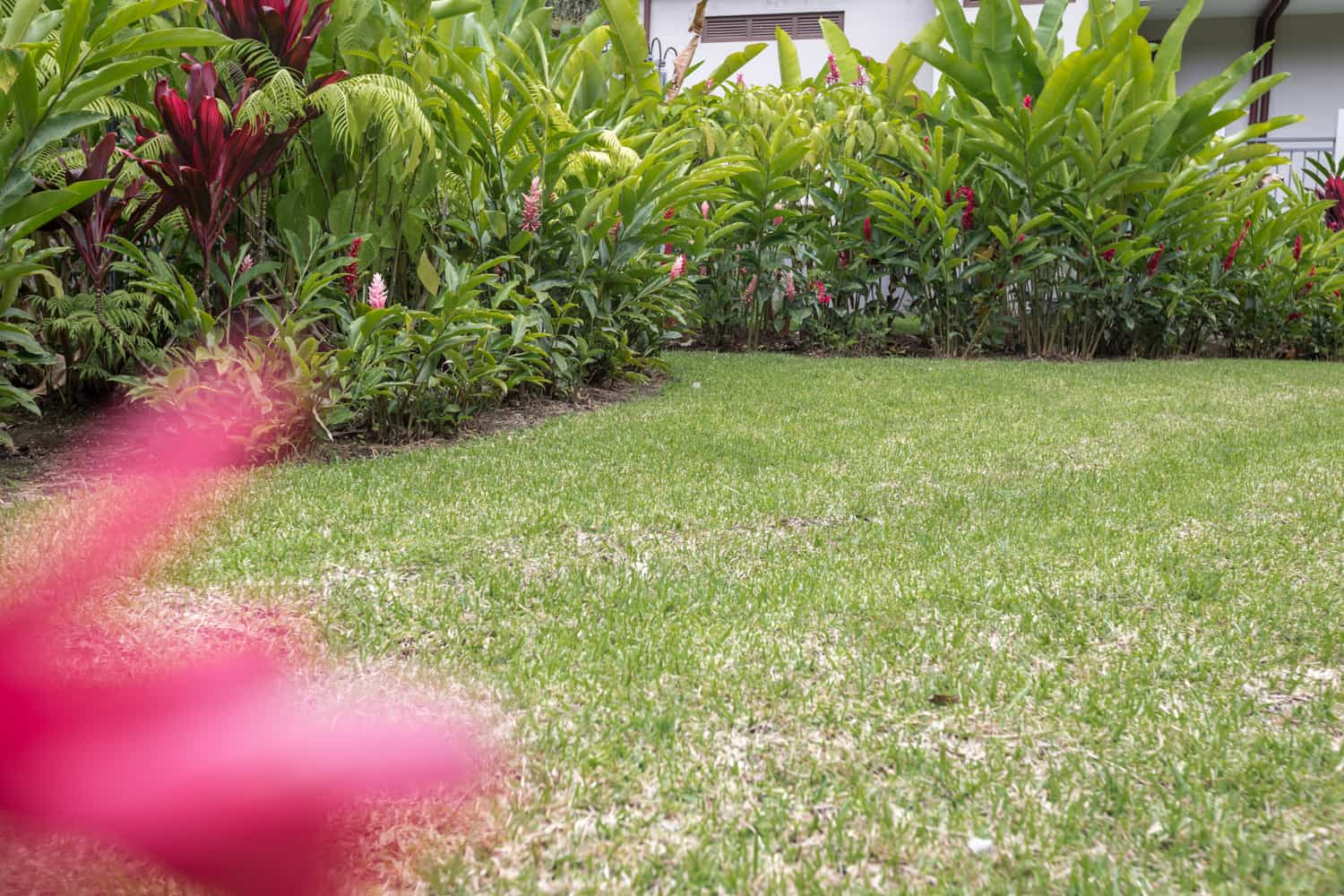 Lawn area for large weddings with flowers and rainforest along sides.