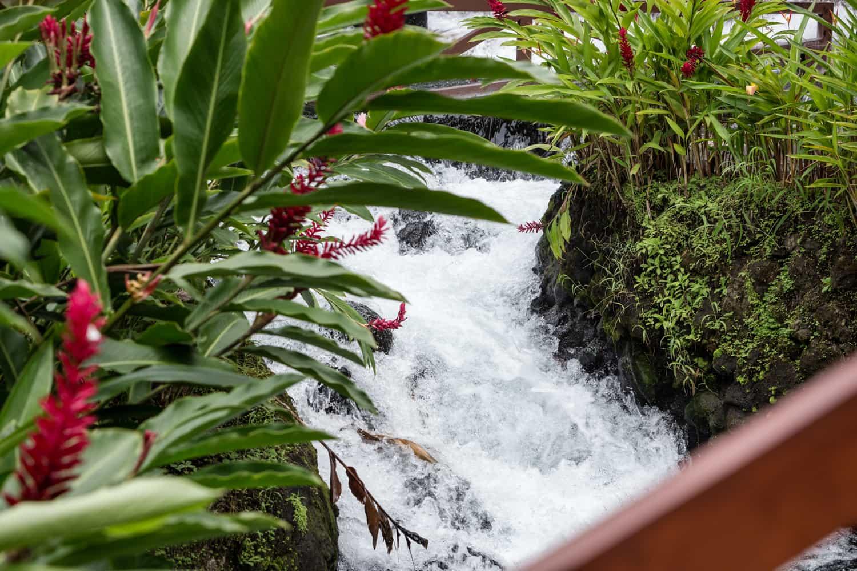 Thermal spring water rushes down river through botanical garden.