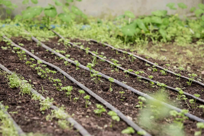 Seedlings in El Silencio Lodge's organic greenhouse.