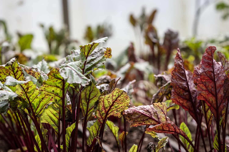 Organic-Farm-El-Silencio-Bajos-del-Toro-10.jpg