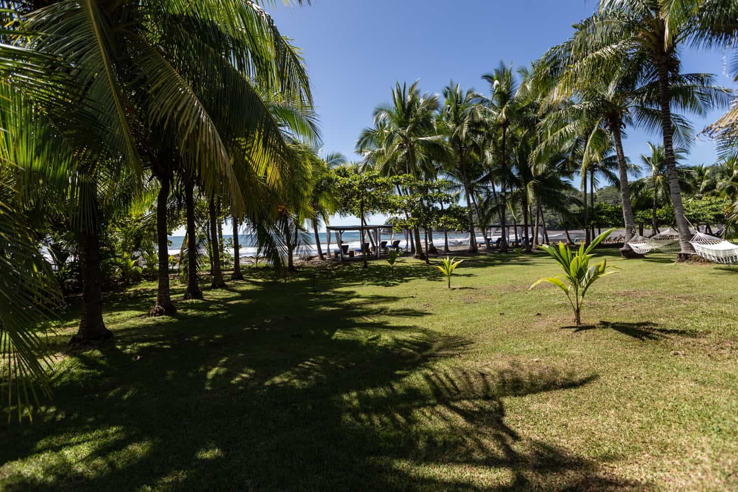 Garden area by beach lined with palm trees for wedding ceremonies.