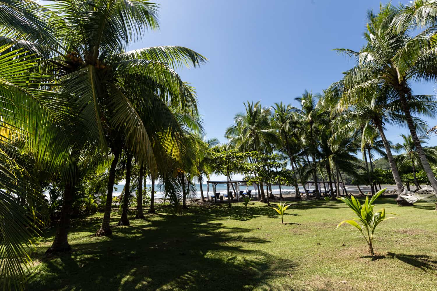 Palm trees decorate lawn for wedding ceremonies by beach.