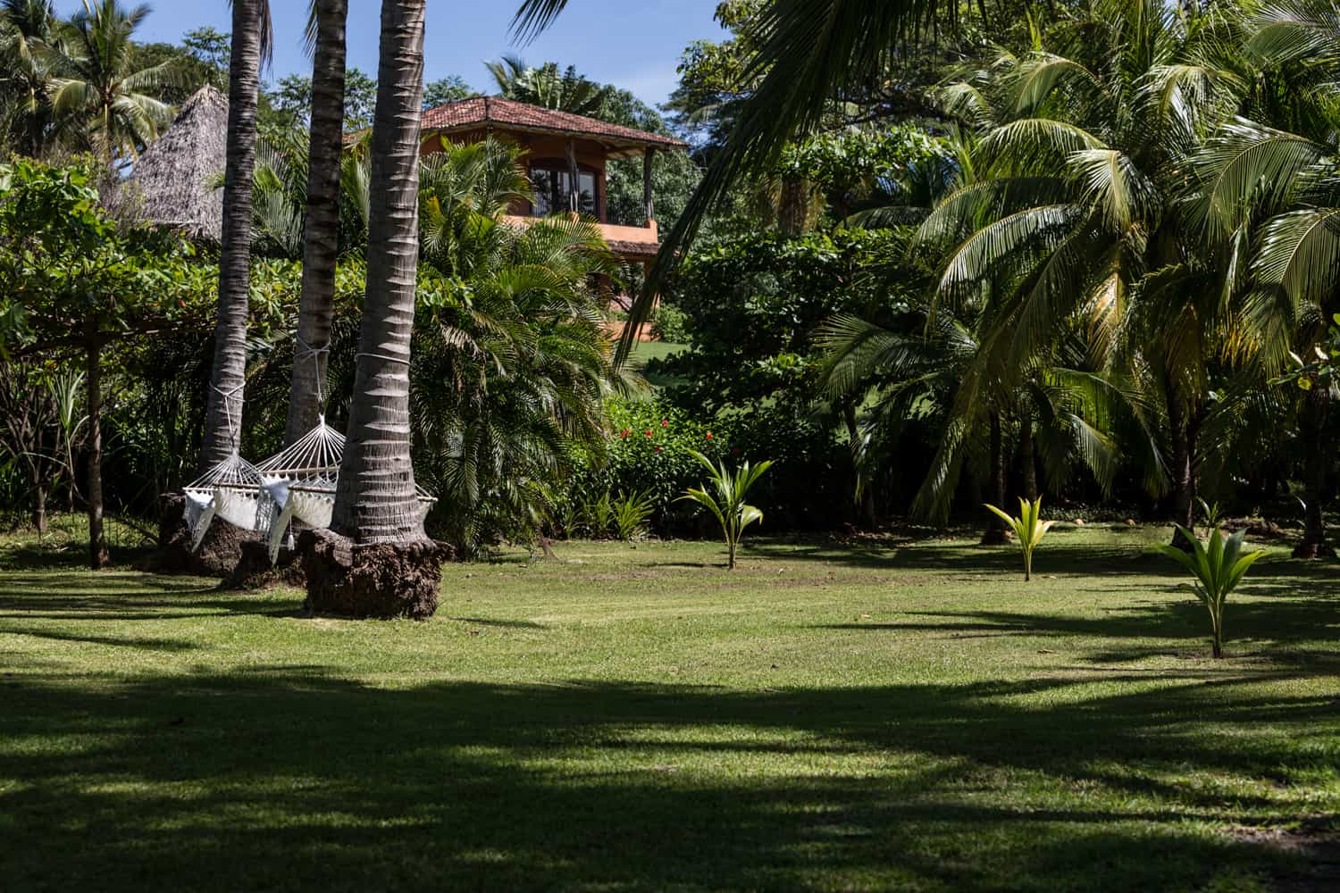 Lush, green lawn adorned with palm trees is great place to tie the knot.