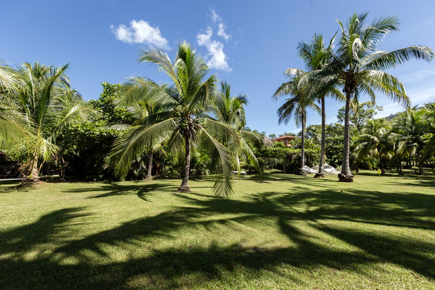 Have an amazing wedding ceremony on palm tree-lined garden by beach.