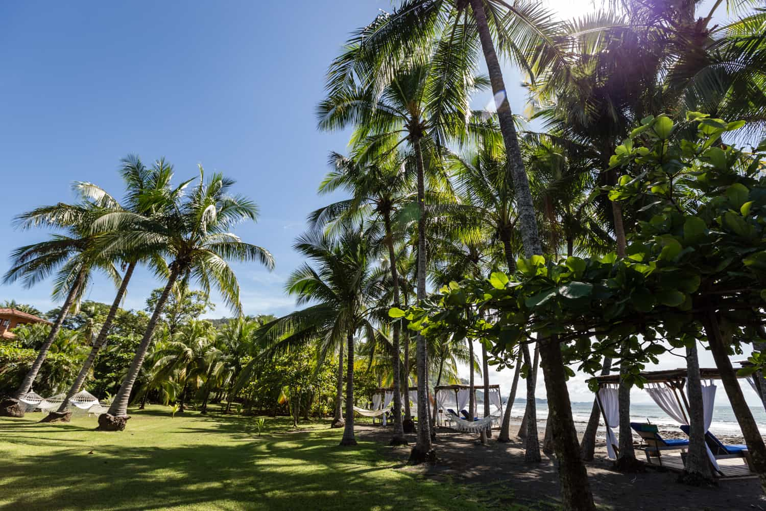Palm trees line border between lawn and beach venues for wedding events.