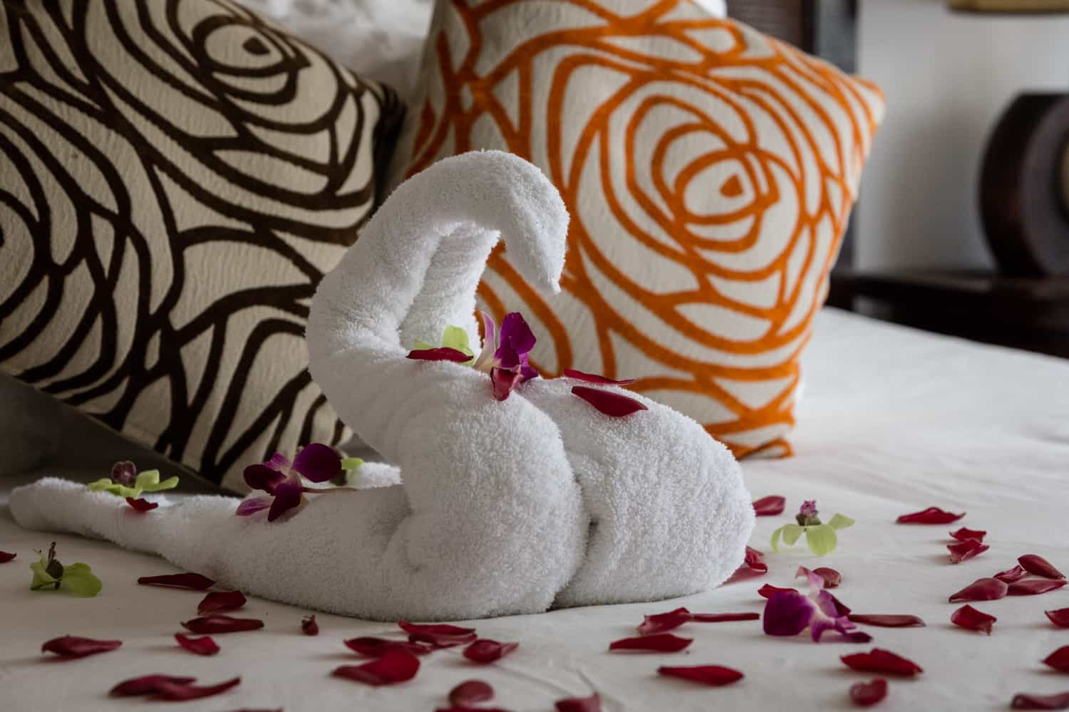 Bed decorated with rose petals for just married couple at Bahia del Sol Hotel.