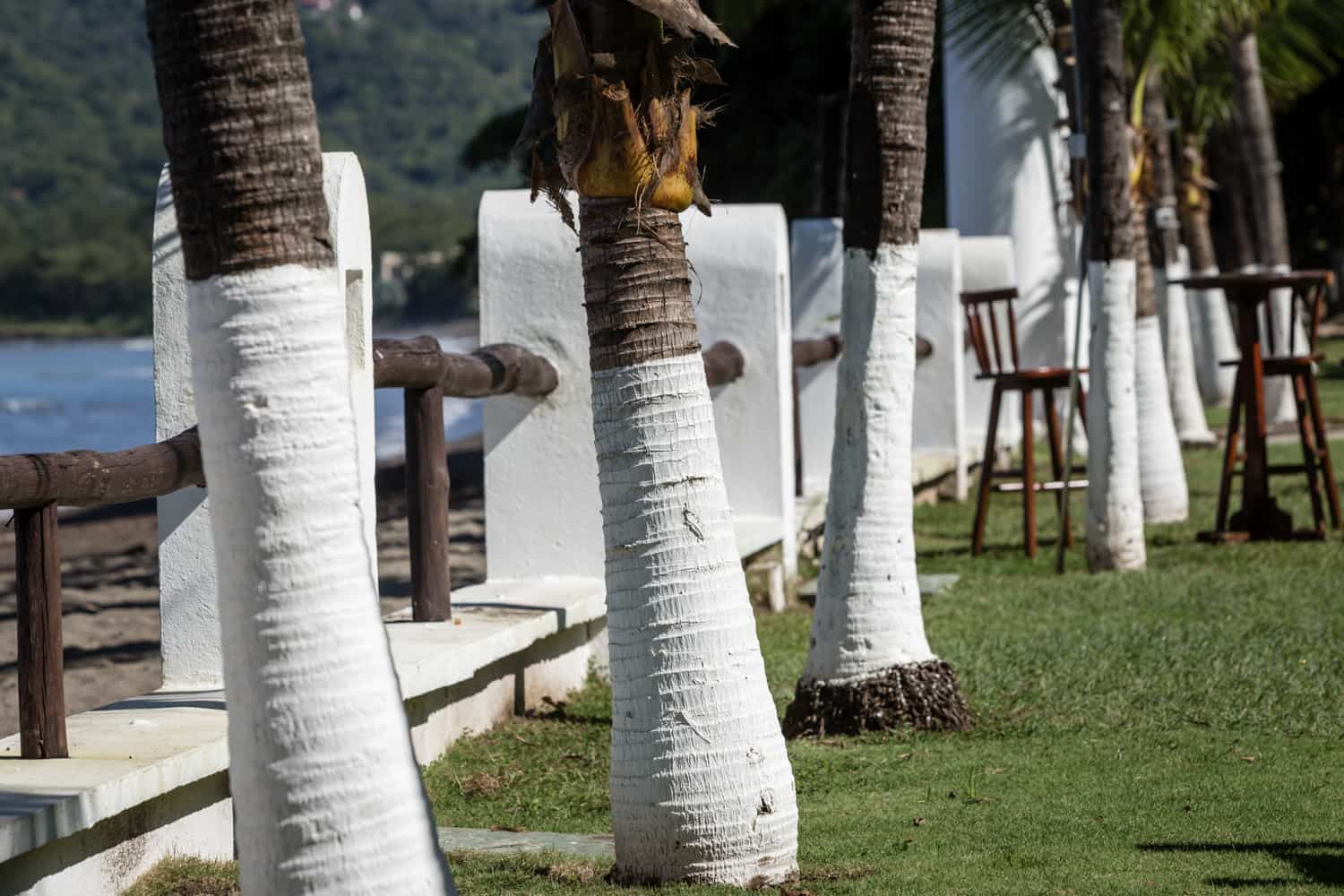 Palm trees line wall separating lawn wedding venue in Guanacaste and beach.