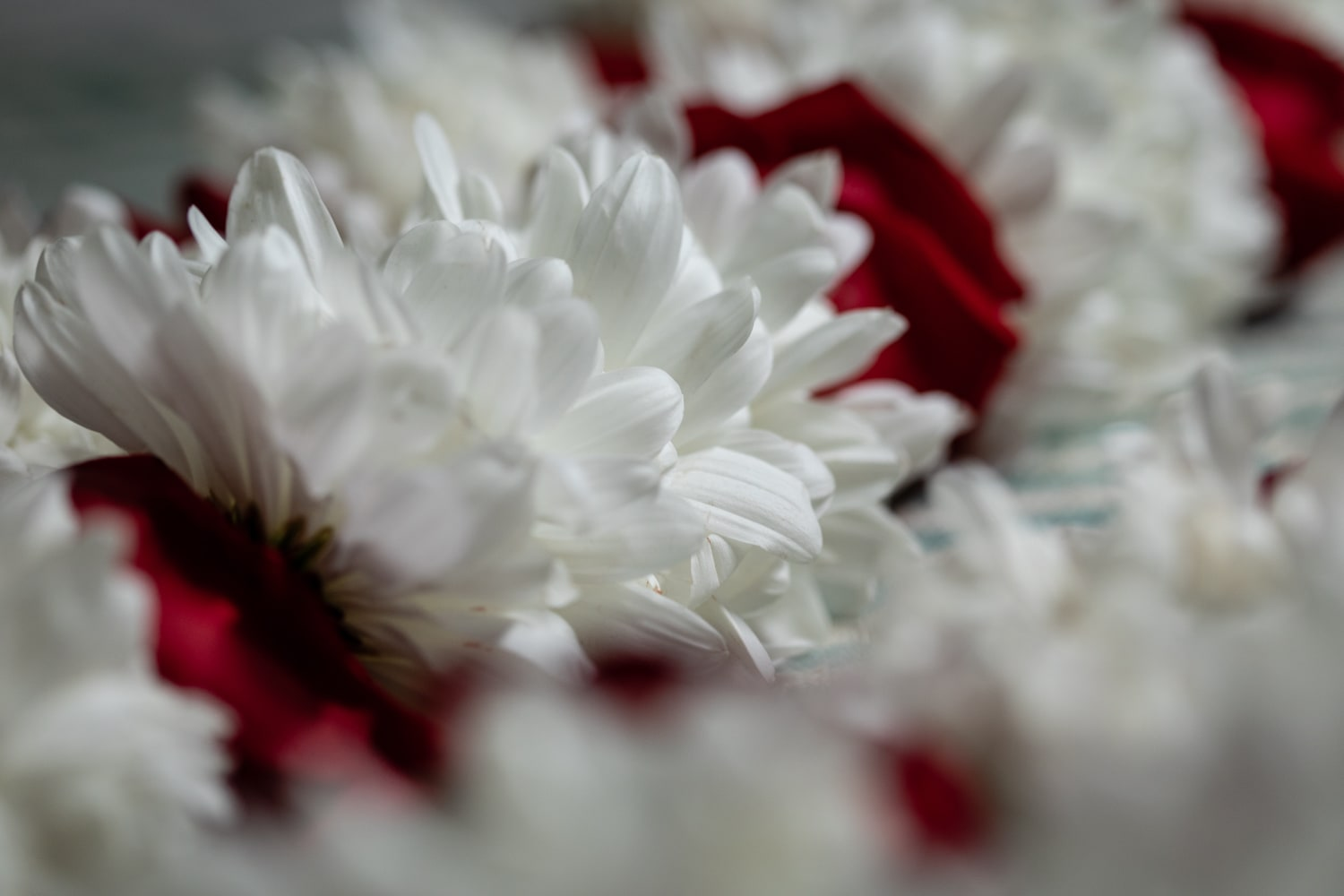 Photo of red and white flowers in Indian bridal garland.