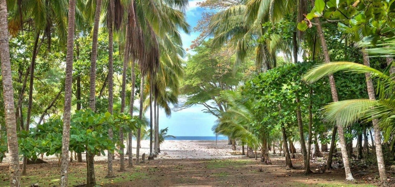 Path to beach wedding site at Hacienda Barrigona, Costa Rica.