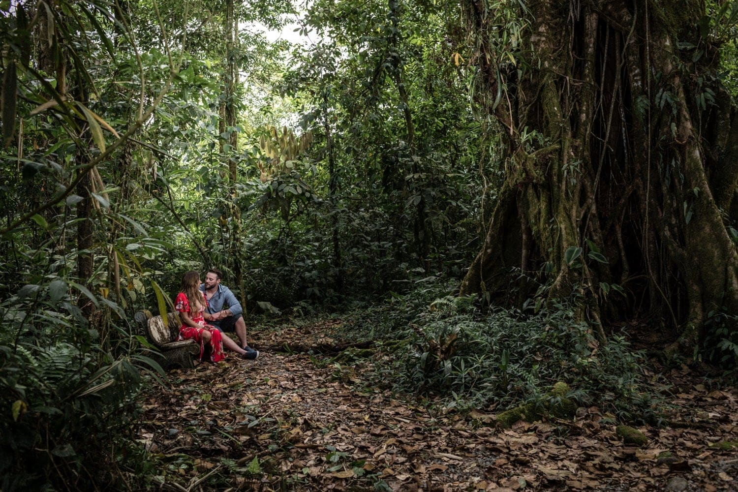 Lovers sit on bench in magical cloud forest engagement photo.