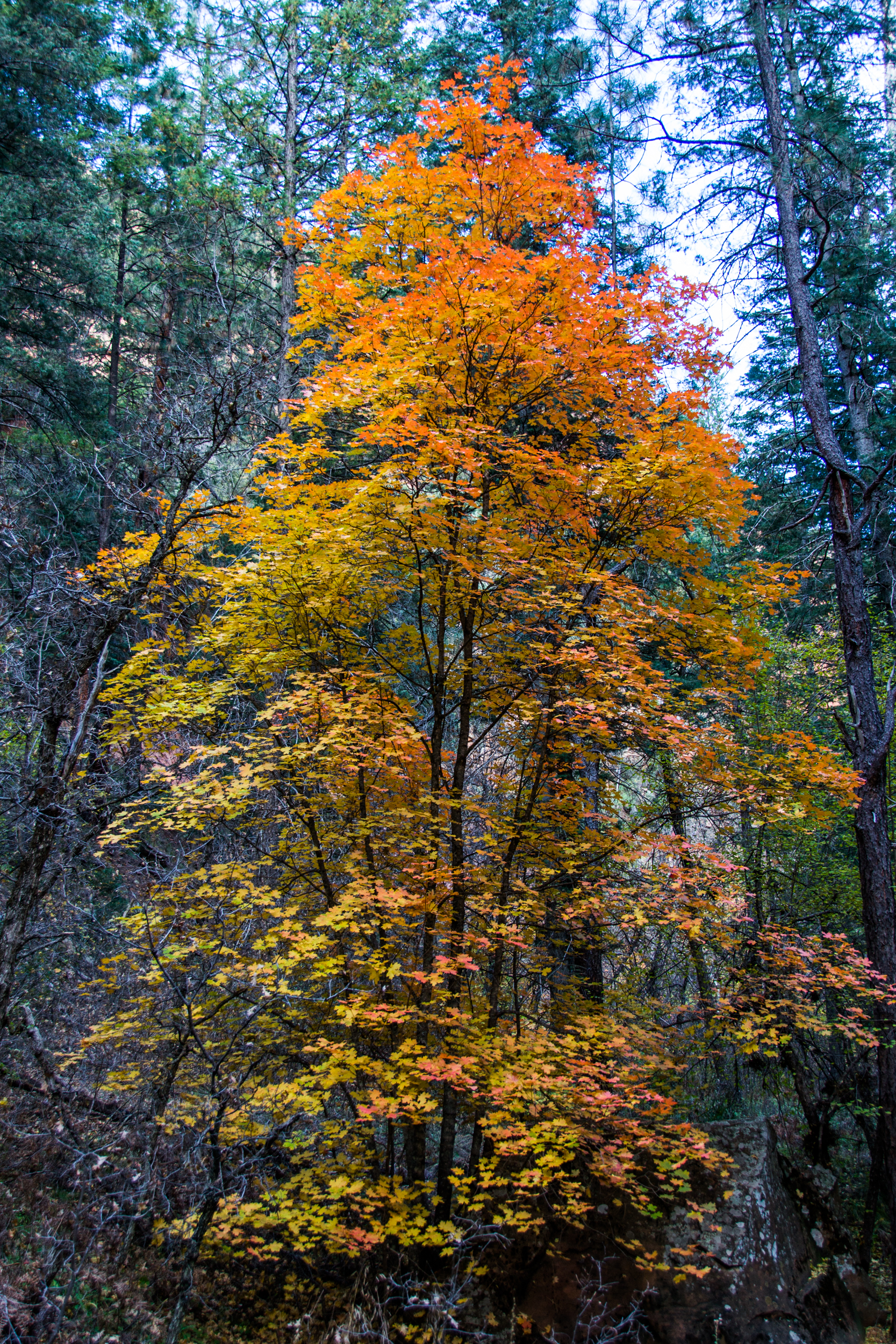 WF Oak Creek Canyon-143.jpg
