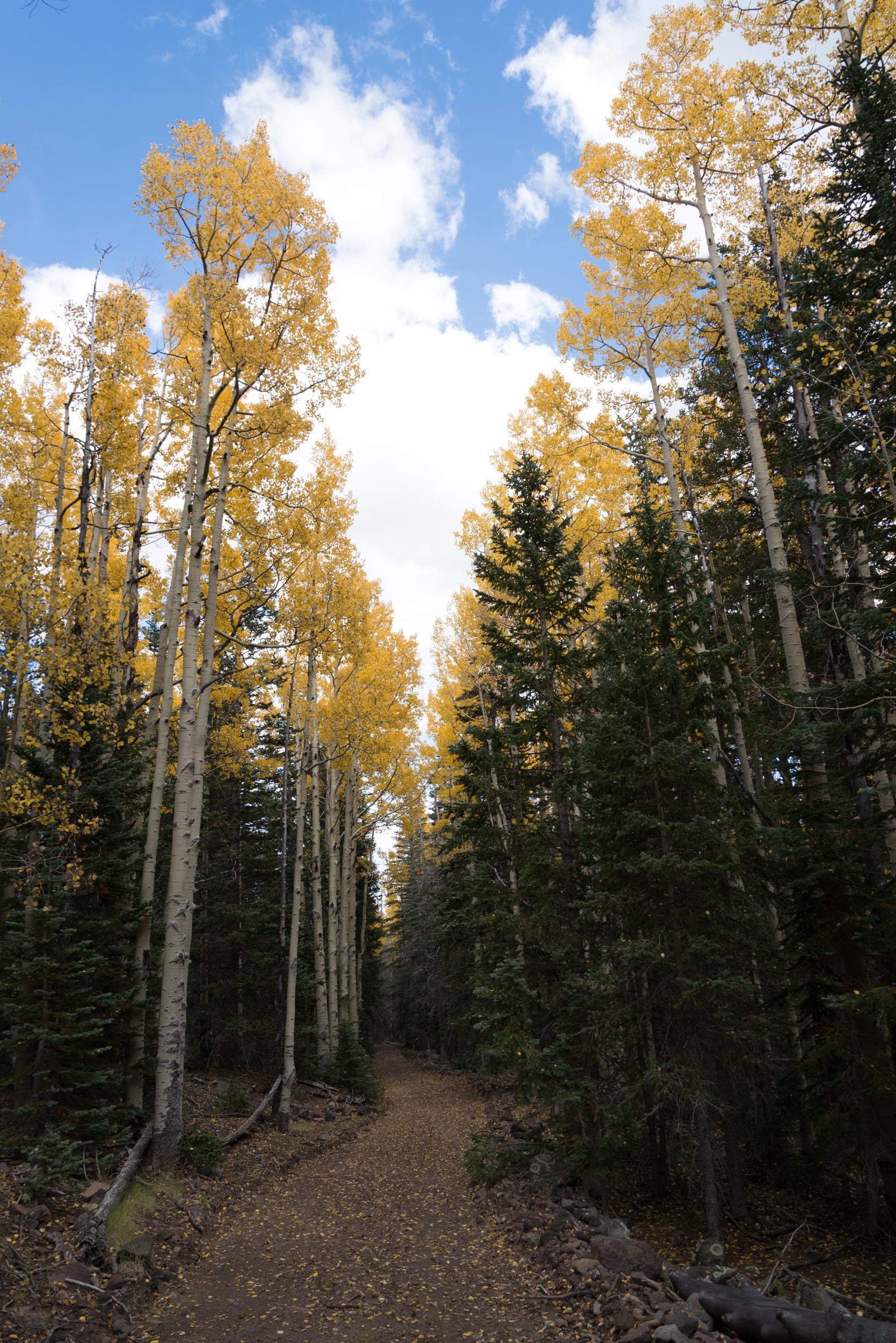 9-29-15 Inner Basin Trail-155-2.jpg