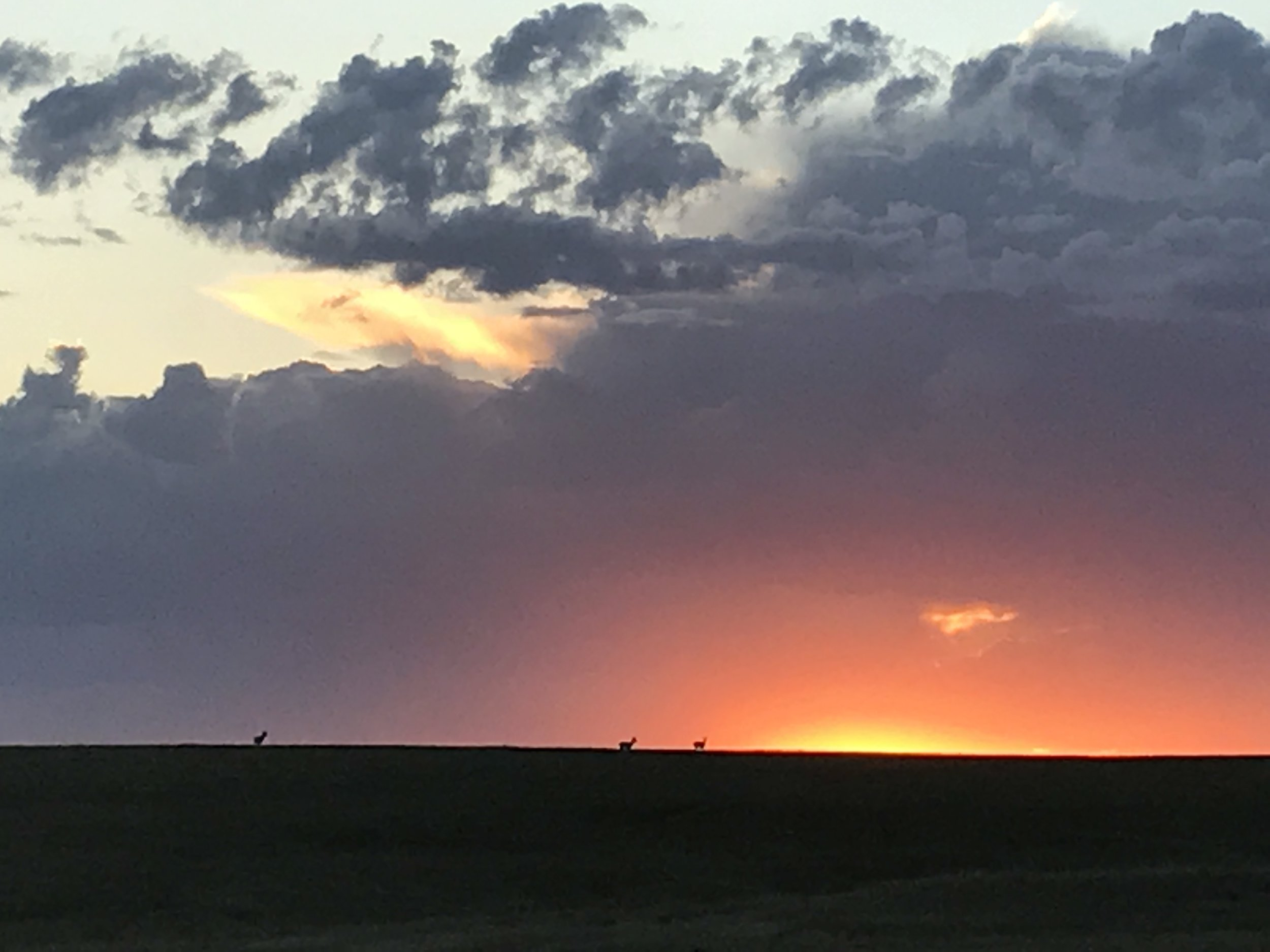 Three antelope silhouetted at sunset. The back one and the middle one were both bucks.