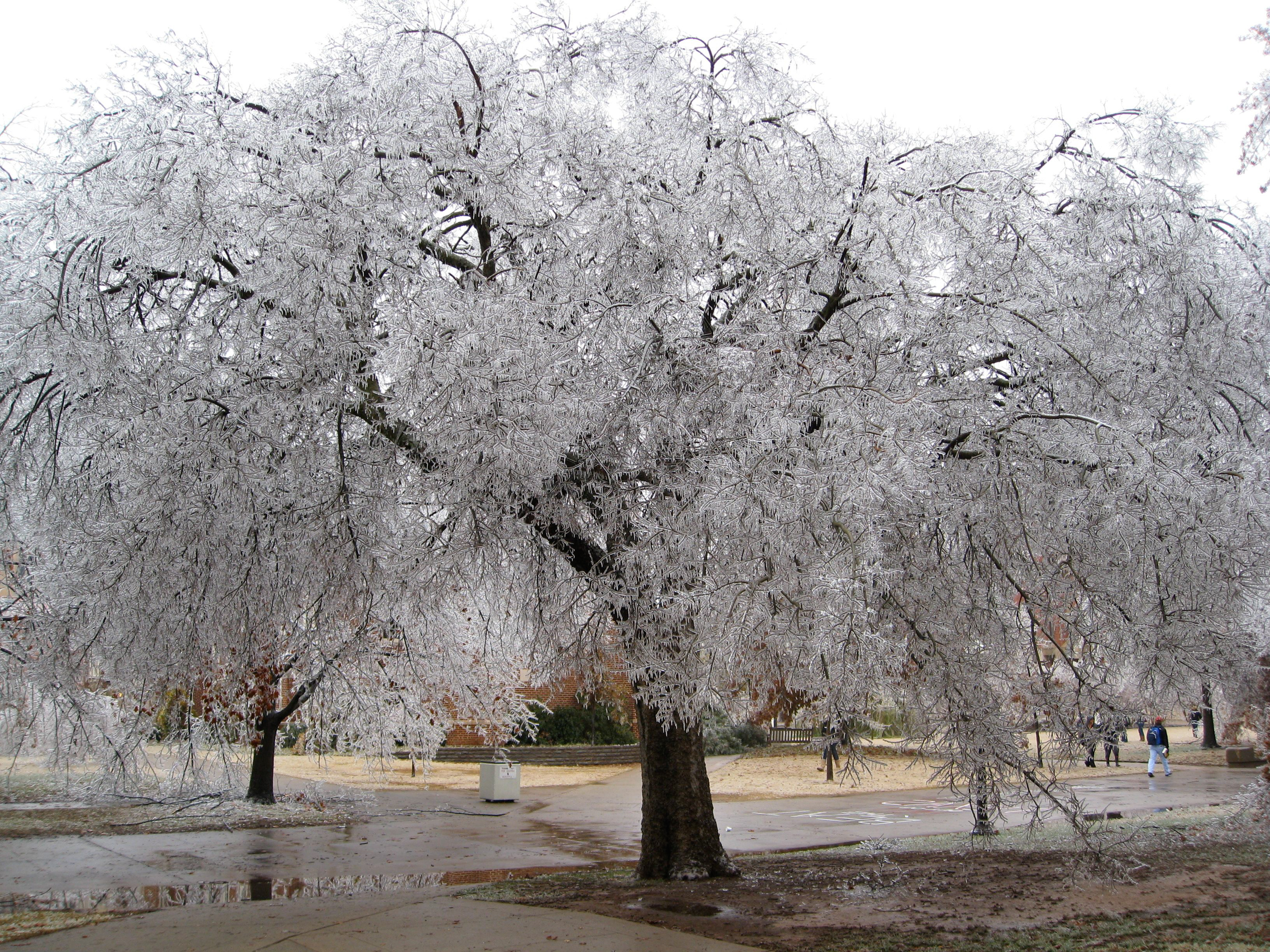 Oklahoma Ice Storm 2007 - Norman, Oklahoma