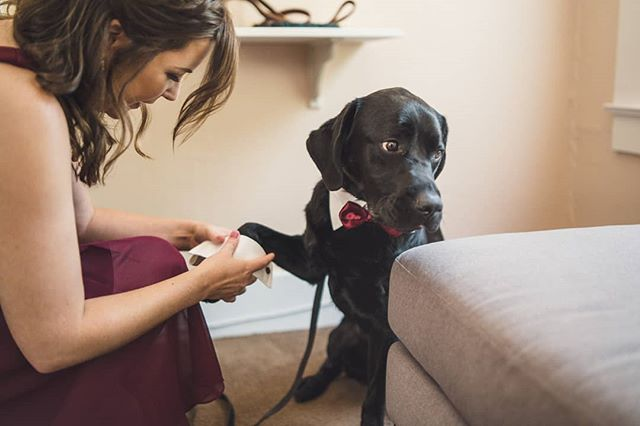 Cuffs for the Dog of Honor's paws? Are you KIDDING me?! Take my money. 😭😍🐶 PC @rippetoestudios 📷 . . . . . #dogofhonor #dogsofinstagram #deerparkvillawedding #dpvwedding #deerparkvilla #wedding #uniquewedding #pinterestwedding #weddingphotography #weddingplanner #californiaweddingplanner