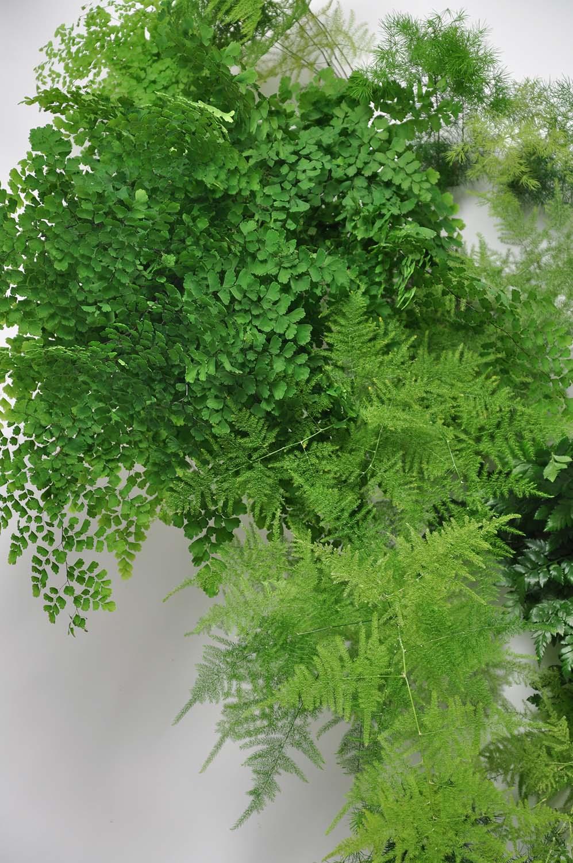plant_mado_todd_morel.2.jpg