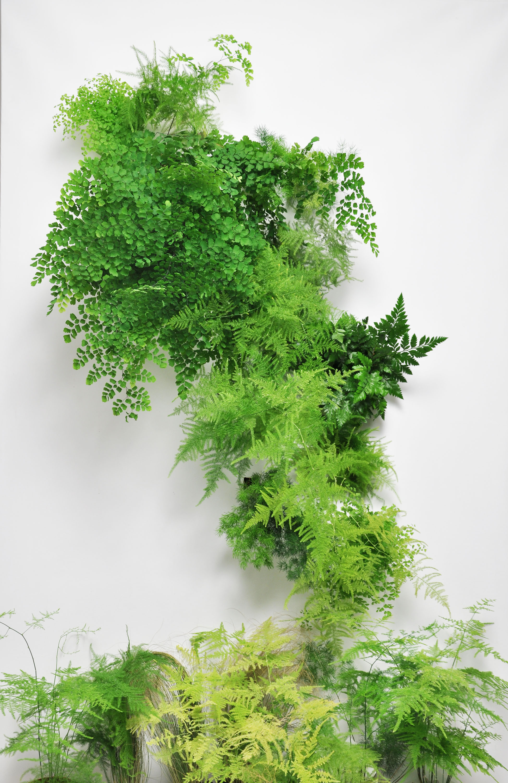 plant_mado_todd_morel.3.jpg