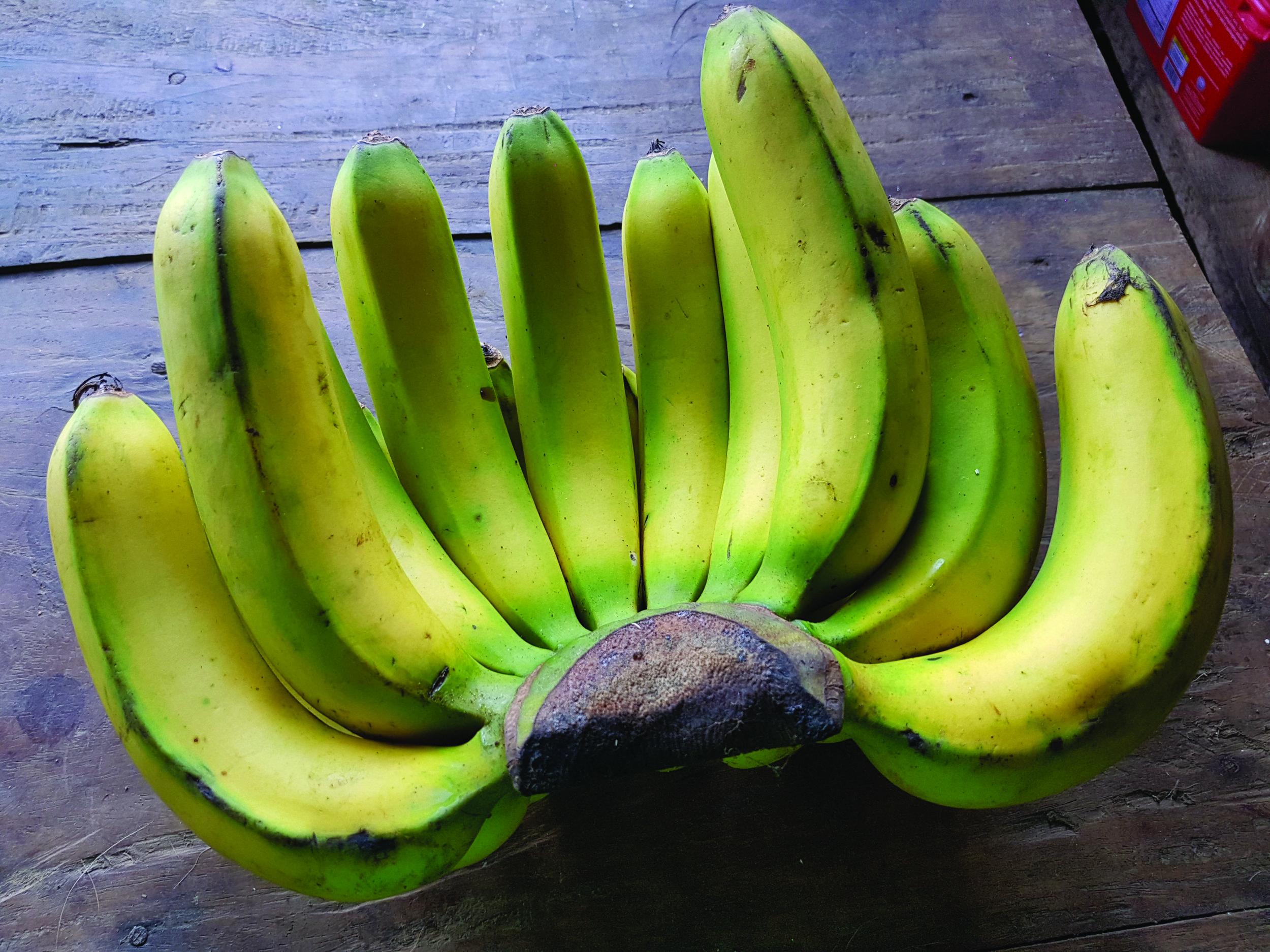 Lakatan_bananas,_Philippines.jpg