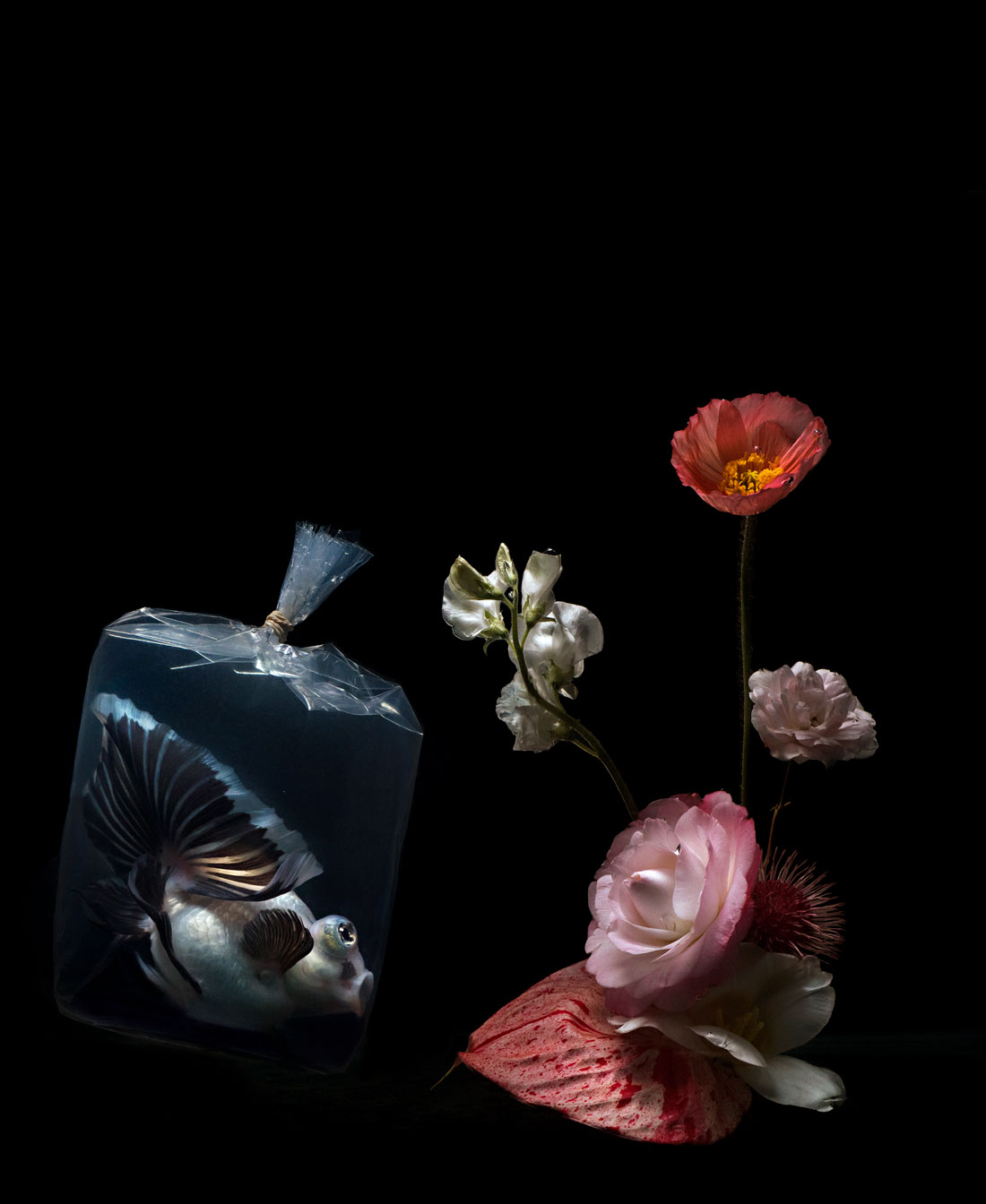 In Dreams , Lilli Waters, 2017 from the series  Plastic Fish